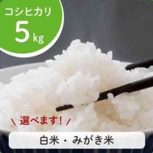 koshihikari-5