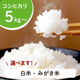 koshihikari