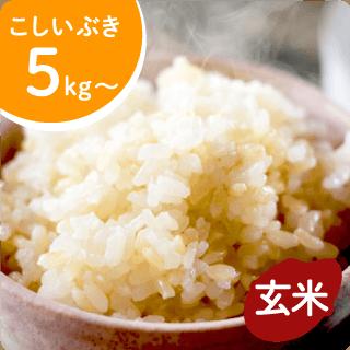 koshiibuki-g