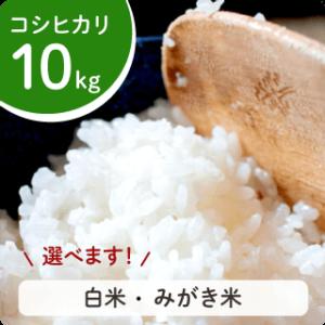 koshihikari-10