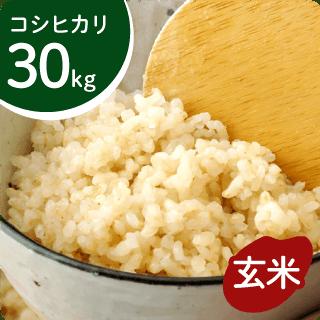 koshihikari-g30